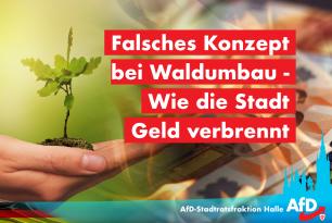 Falsches Konzept bei Waldumbau – Wie die Stadt Geld verbrennt